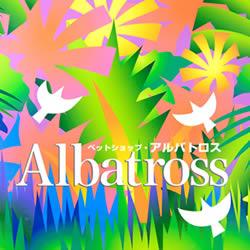Albatross250